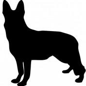 FitnessDog profile image