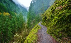 Five Great Scenic Hikes in Oregon