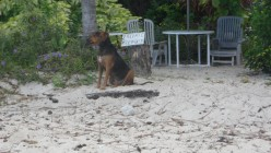 http://hubpages.com/The Ark: Saving The Dogs On Barbados