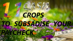 11 Cash Crops to Subsidize Your Paycheck