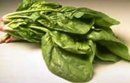 Raw spinach leaves