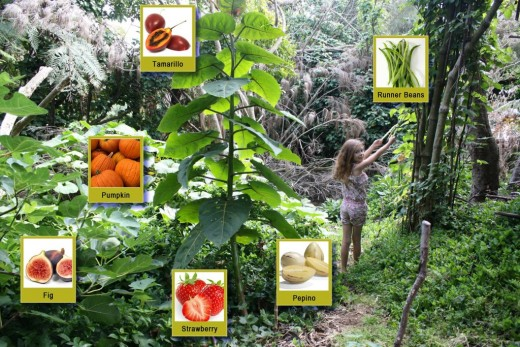 Permaculture food forest showing some of the foods that grow on it. Notice how it is safe enough for a little girl. It also shows that it does not need much space but that they can grow a lot of different things on it.