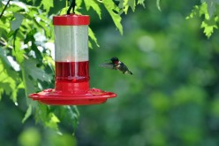 The Hummingbird: Folklore, Symbolism, and Spirit Guide
