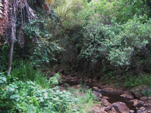 Tread carefully and quietly and you may just see some of the wildlife that call the Waimea Valley their home.