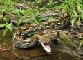 Top 10 Deadliest Snakes Not To Mess With