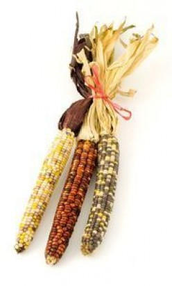 Indian Corn: Growing, Harvesting, Enjoying