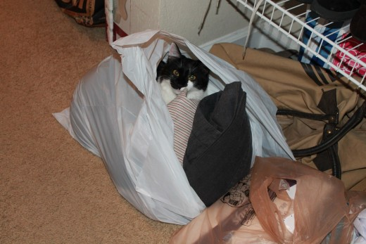Classic two-for-one photo - wife brings home hunting bargain while cat plays in an inexpensive plastic bag.