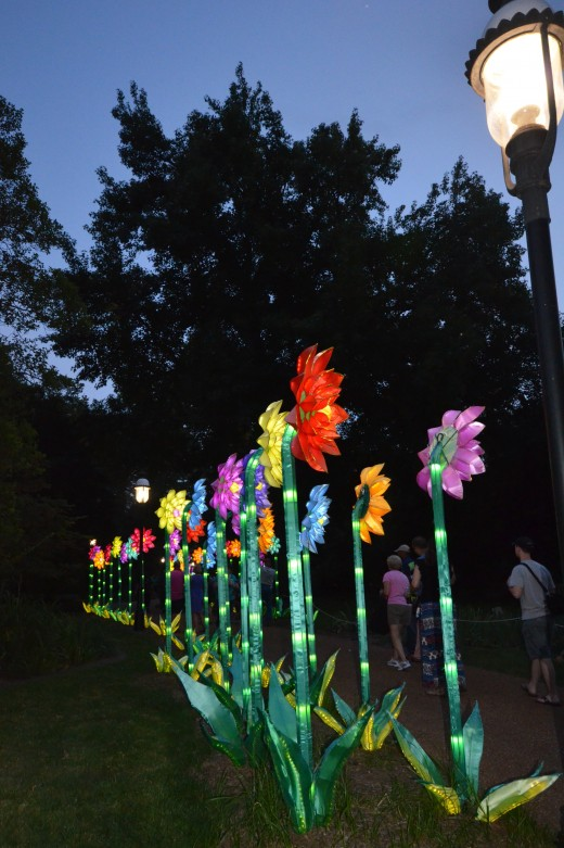 A row of beautifully lit up flowers.