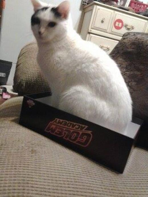 Odin loves her some GA box!