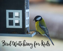 Fun Activities with the Children: Bird Watching