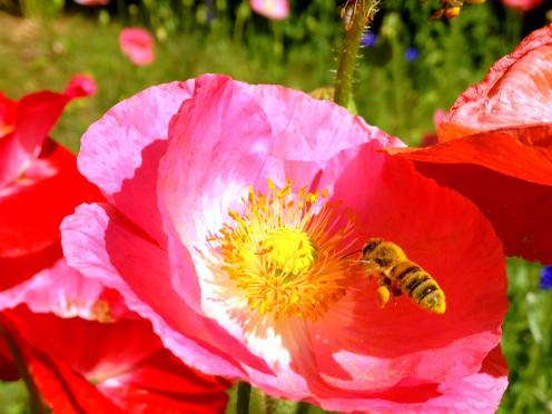 Bee-Happy!
