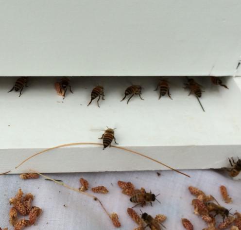 Bees at the Box
