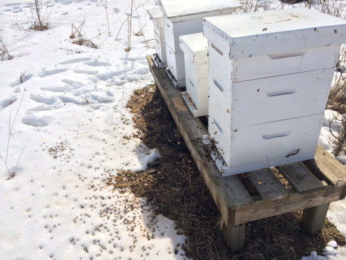 Bee Hives in the Wintertime