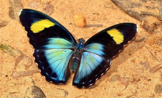 Colourful Butterfly in Nigeria