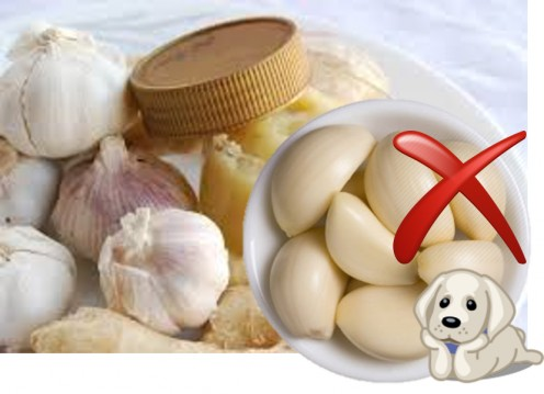 Garlic and Garlick Paste is bad food for dog