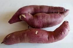 The Potato Vine Doing Miraculous Feeding To the Nation!
