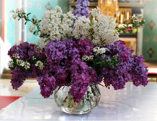 Lilacs are a wonderful room deodorizer and help rid indoor pollutants.