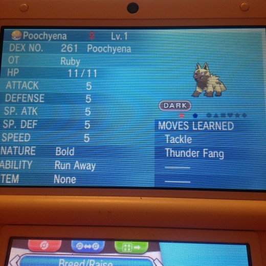 Also hatched this Poochyena
