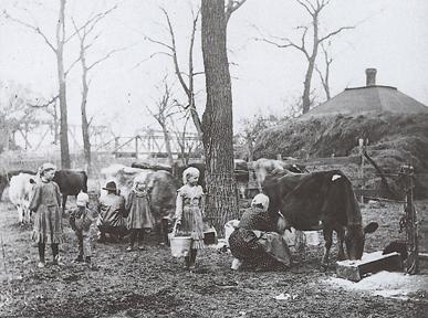 Kansas family  milking their  cows.