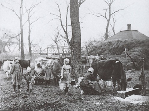 Kansas family  milking their  cows.