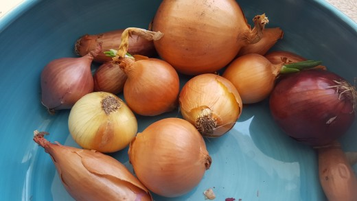 Start with ordinary onions