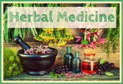 Herbal Medicine: Keeping the Ancient Art Alive