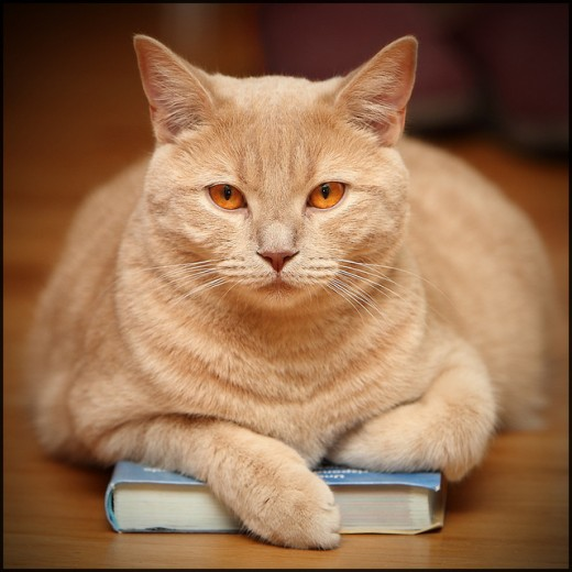 Cats are always up for a good read.