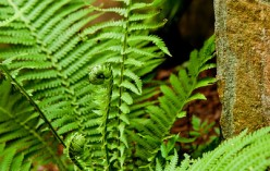 Fern Plants No Longer Take a Back Seat to Big Bloomers