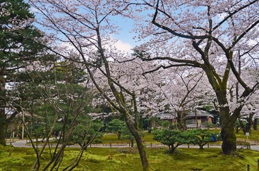 Mid afternoon serenity at Kanazawa's Kenrokuen.