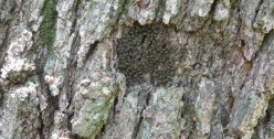 An Invasion of Barklice Is Lucky—Just Like Having Ladybugs!