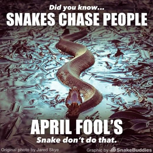 Snakes Don't Chase People