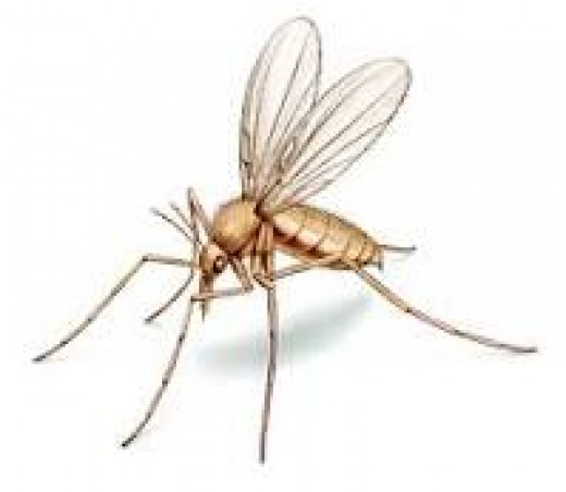 Sandfly. Small but big on Nuisance