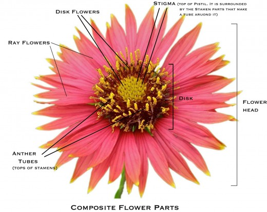 How to Identify Six Plant Families Using their Flowers