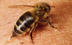 Thanks to Mom, I No Longer Pet Bees