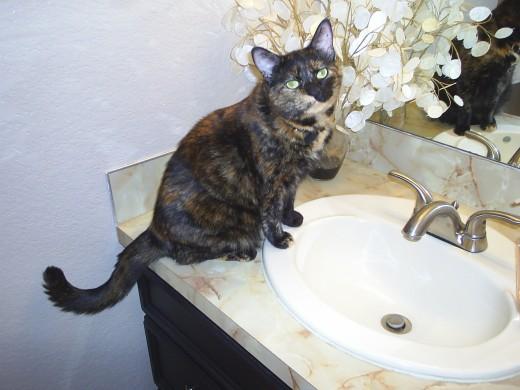 cat care training courses