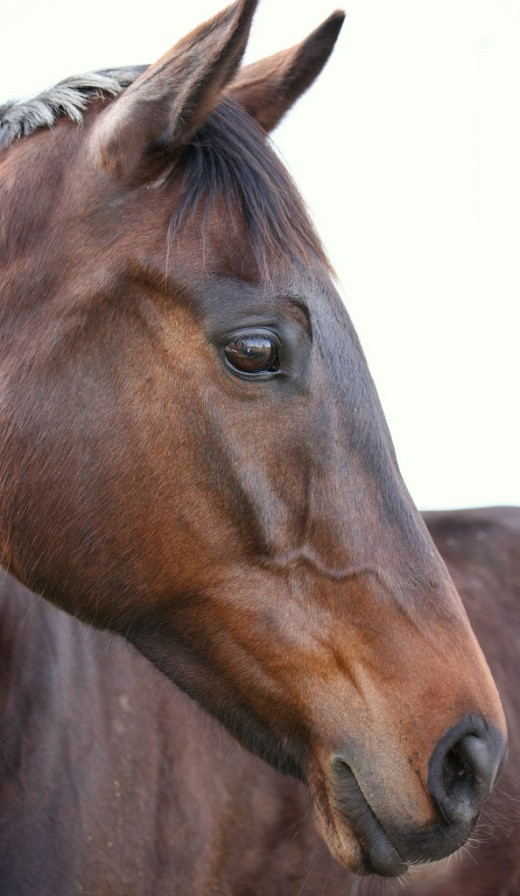 hand-over-fist_Cool Horse Name Ideas | PetHelpful