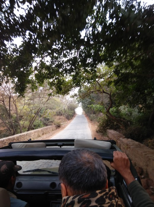 Road leading to Ranthambore Fort