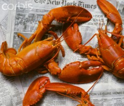 Fresh boiled lobsters are verboten to me now.