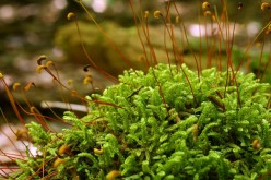 Moss Explosion:Greenery At Its Finest