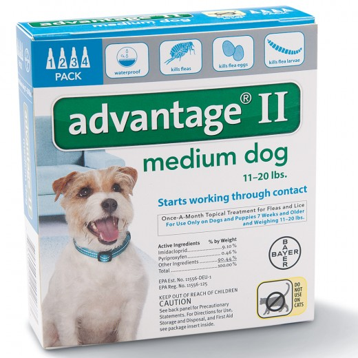 Accidentally Gave A Cat Dog Flea Medicine Hubpages