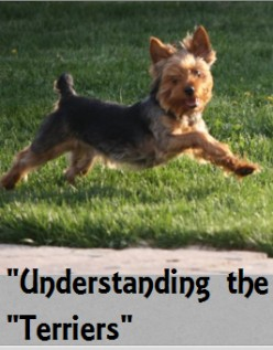 Understanding the Different Types of Terriers