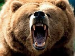Why I'm Afraid Of Teddy Bears