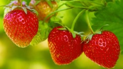 More than 10 benefits of Strawberry