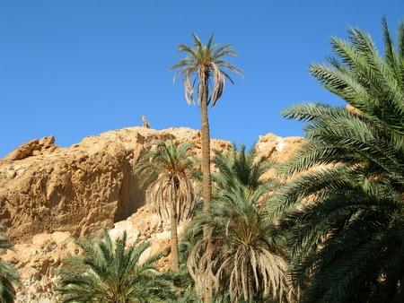 Oasis Shebika, Tunisia