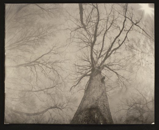 """The Woods Behind My House"" - Unedited photograph, Quaker Oats Box Pinhole Camera (6th Grade Art Project), 60 Second Exposure, 8x10 Negative, 8x10 Contact Print, Processing done by hand in the boiler room"