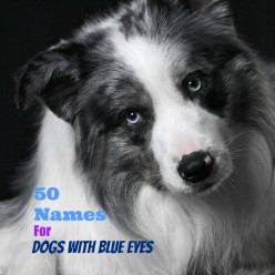 50+ Unique Names For Dogs With Blue Eyes