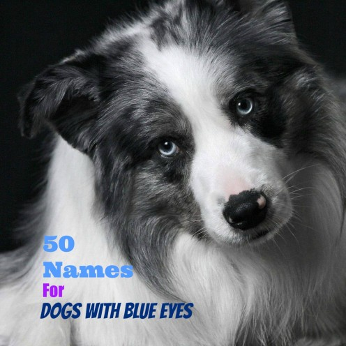 50 Unique Names For Dogs With Blue Eyes