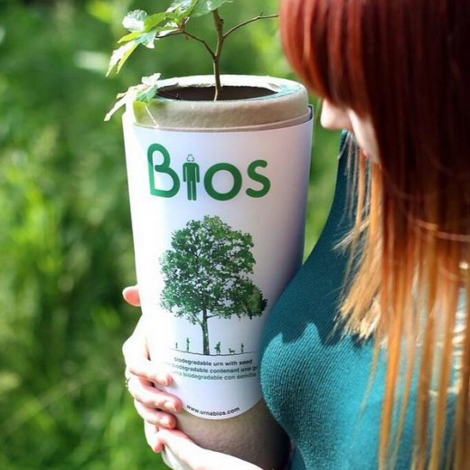 This is what a Bios Urn looks like.