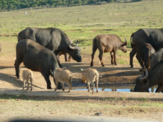 Sharing with the Warthog