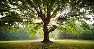 Disobedient life to take nature for money, education and shame a guiltless Sorted life for the creation of Everlasting life. You are all damned, for nature forgave all.